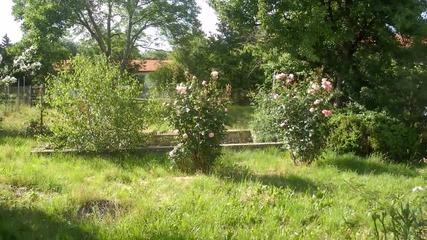 Филиповци три къщи в един двор 9