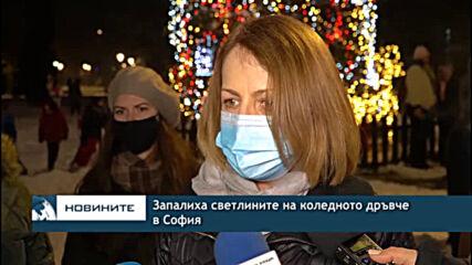 Запалиха светлините на коледното дръвче в София