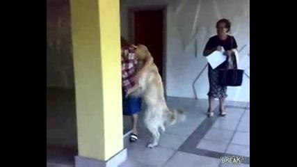 Това куче направо се гаври с горката женица