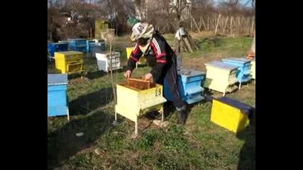 Изтръсване на пчели - крадци