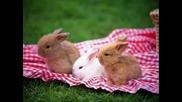 сладки зайчета
