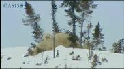 Първите стъпки в живота на полярните мечета..
