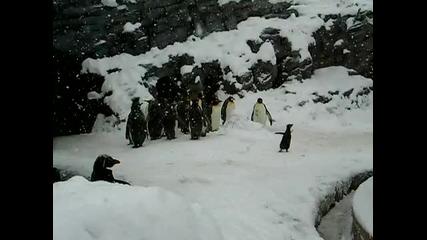 Радостта на пингвин