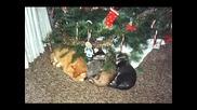 Смешна Котешка Коледа :) Хихиих