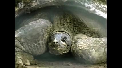 Топ 10 Необичайно големи животни