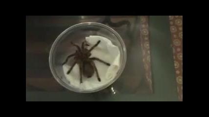 Номер с тарантула