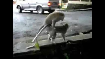 Animal sex Голям смях