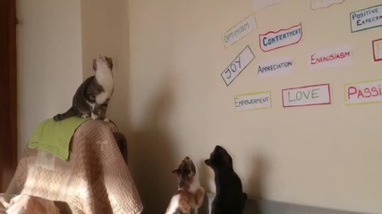 Котки срещу светло зайче. Смях!  BTW