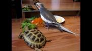 папагал се кълне костенурката