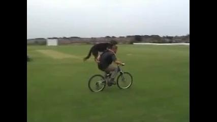 нок се вози на колело - Зина