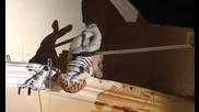 Ебавка С Пожарникари - Тигър На Покрива - Смях