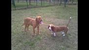 Chloе и Roni best friends