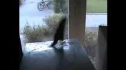 Папагал танцува : Jumpstyle