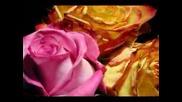 Машина на времето - разцъфване на цветя