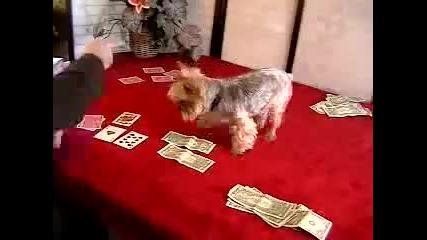 Куче играе покер:):)