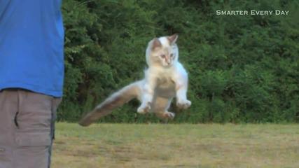 Защо котките падат винаги на краката си ?