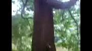 Пикаещото Дърво