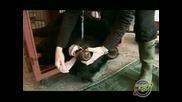 Бинди: Момичето от Джунглата - Епизод 06 – Зъболекарски работи