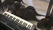 Видри свирят на синтезатор
