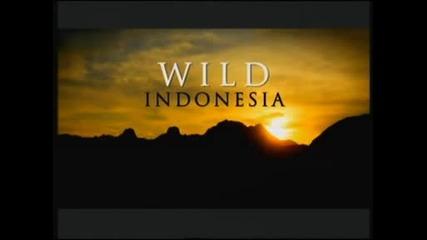 Дивата Индонезия - Острови на чудовища - Борнео, Суматра