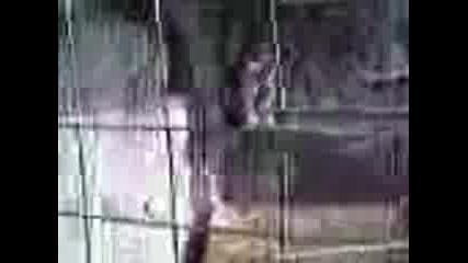 Маймуната Сериен Обиец