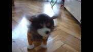 Интерактивно Кученце 19.12.2011