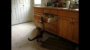 Коте отваря шкаф