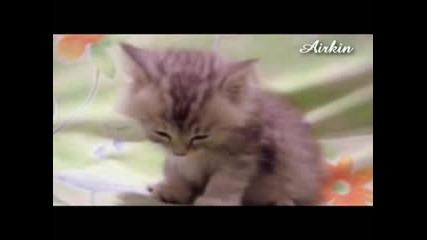 Малко Коте Заспива