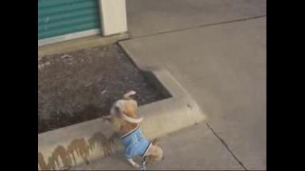 Най - смешното куче в света!