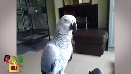 Какво става, когато папагалът ти се ядоса