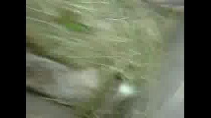 Зелен Гущер