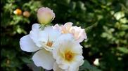 Ernesto Cortazar - Se Guire Mi Viaje - Sabor A Mi - Beautiful White Flowers