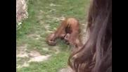 Много Смях - Маймуна В Тоалетна