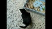 Зайче спуква от се*с котка :) ) ) 1000000% смях :д :д :д