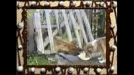 Лудото Куче Е Супер Гладно