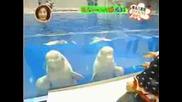 Делфините се кефят с Мияви