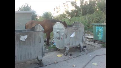 Кон яде от кофа за боклук