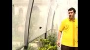 Отблизо с пеперудите на Рим