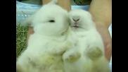 Малки прелестни бебета зайчета