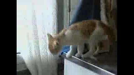 Котка Пада В Кошче За Боклук