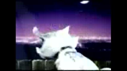 Чело Коте