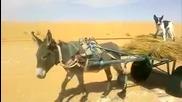 Кой ли кара каруцата ? :d