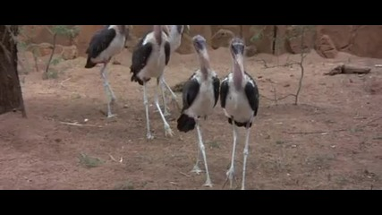 Трифон зарезан в Африка