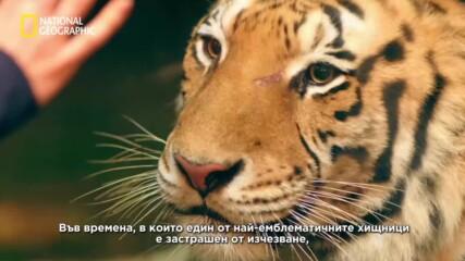 откъс от еп. Тигри | Трафиканти с Мариана ван Зелер | National Geographic Bulgaria