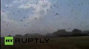 Russia: Plague of locusts descends on Stavropol