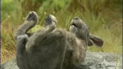 Зайци си падат от смях пред змия :d