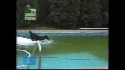 много умно куче (смях)