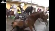 Конят си намери любовта на живота