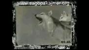 Sagopa Kajmer - Vasiyet