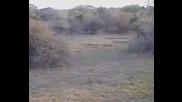 Животът на слоновете в Африка :)